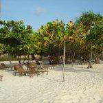 relax sotto l'ombra di palme e piante varie