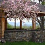 Spring at Ashokan Dreams