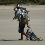 Local Fisherman walking towards resort