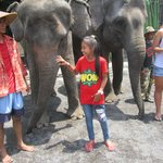 Enjoyed with elephant