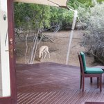 A visitor to our Bedouin Suite