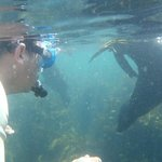 snorkelling with a Seal at Whale Island