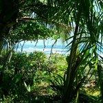 Jungle near Banana Azul