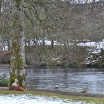 The river Tay from hotel grounds