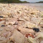 pretty shells n coral