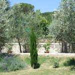 Olive oil and lemon trees at B&B Villa Nobili