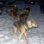 Winter Evening Dog Sled Ride
