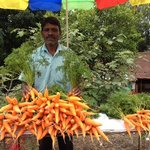 the carrot farmer who sells fresh produce right in front of