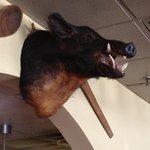 The boar's head!!
