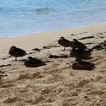 duck family at crystal cove