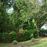 Umgebung/Garten