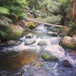 Toorongo Falls.