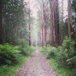Ada Tree walk thorugh the forest.