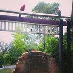 Parrots at BBQ area.