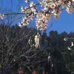 ein kerem jerusalem almond blooming