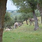 also roman farm