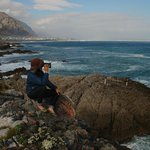 Looking for whales in Hermanus