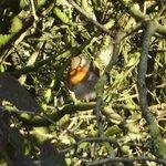 Robin on the Monsal Trail