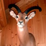 Ever wonder why there are no big animals in the French Alps? They're all hangi