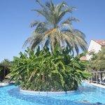 Palmowa wyspa na basenie