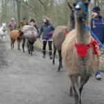 Our group walking the llamas and alpacas
