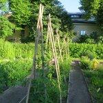 Linnaeus Garden Behind First Hotel Linne