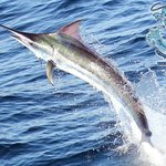 Mar 1 Sport fishing Quepos Day Trips