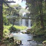 Whangarei Falls nearby