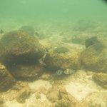 Playa Aventureiro snorkel