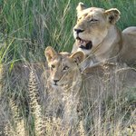 First day game drive