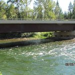 Adams River bridge