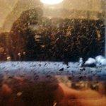 Vista da janela do quarto. Sujeira e ratos