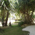 hermosa palmera