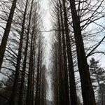 Forest at Namiseom