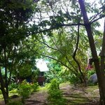 jardin koh tao royal resort