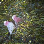 birdlife in the garden.
