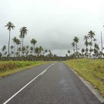 Drive through the coconut plantations