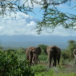 Elephants at the waterhole in Tawi Lodge