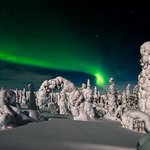 Frosted Trees With Aurora