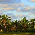 Las palmeras del jardín