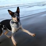 Cosmo having fun on the beach at Deane's