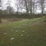 Snowdrops in the hotel grounds
