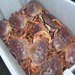 Yumm! Fresh Dungeness Crabs!