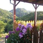 Lavender Farm Haloze Foto