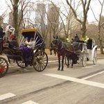 Traffic Jam Central Park