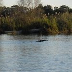 Hippos sighted on the sunset cruise