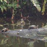 Animales en los canales