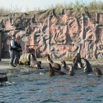 Sea lions. Lunch time.
