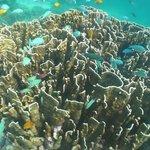 merveilleux fonds marins