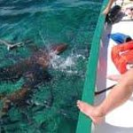 sharks off the boat - yes we snorkeled with them ! awesome
